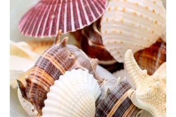 Поделки из морских ракушек